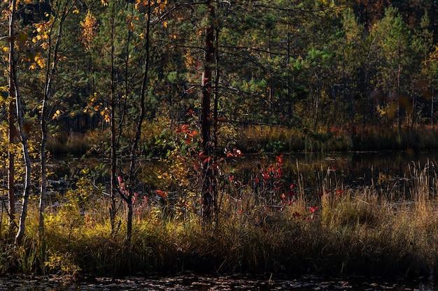 Malerischer hintergrund mit den bunten herbstbäumen und einem see
