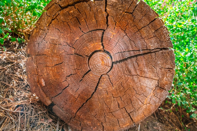 Malerischer mammutbaum nationalpark usa