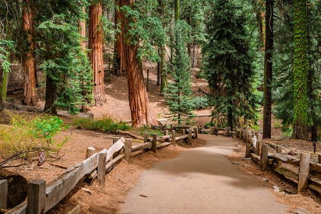 Malerischer mammutbaum nationalpark usa Premium Fotos