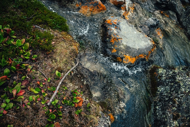 Malerischer naturhintergrund des türkisfarbenen klaren wasserstroms zwischen felsen mit moosen, flechten und wilder flora. stimmungsvolle berglandschaft mit transparentem gebirgsbach. schöner gebirgsbach.