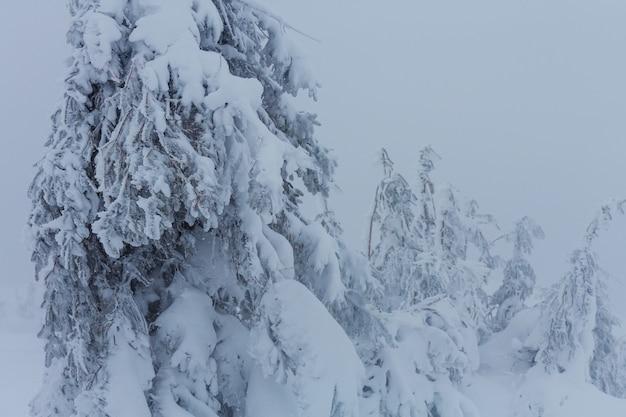 Malerischer schneebedeckter wald in der wintersaison. gut für weihnachtshintergrund.