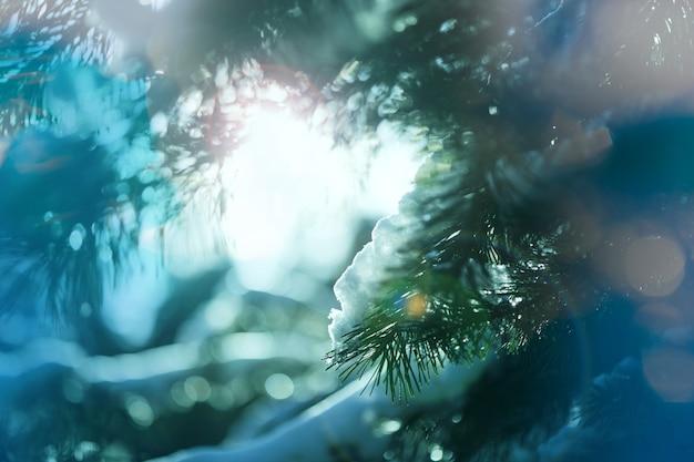 Malerischer verschneiter wald im winter