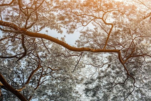 Malerisches bild eines tannenbaums. frostiger tag, ruhige winterszene. toller blick auf die wildnis.
