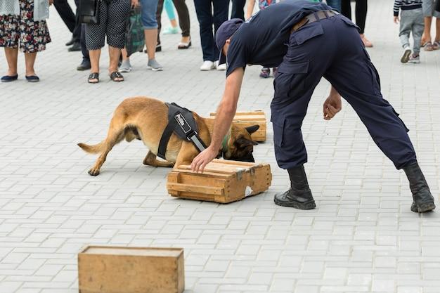 Malinois belgischer hirte bewacht die grenze die grenztruppen demonstrieren das können der hunde