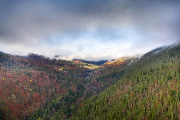 Malvonische herbstmorgenlandschaft. sonnenstrahlen lange schatten und morgennebel über dem wald.
