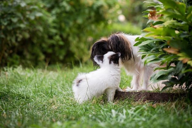 Mama hund schnüffelt welpen auf dem gras im garten