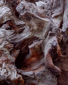 Mammutbaumwurzel. holzbeschaffenheit. mahagoni wurzel textur. (hohe auflösung)