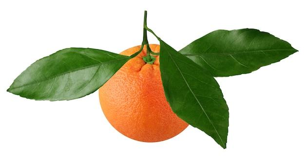 Mandarine mit blättern isoliert