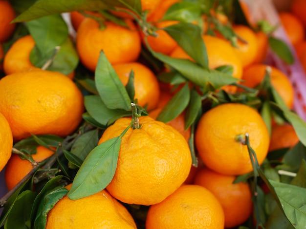 Mandarinen mit blättern nahaufnahme. mandarinenbauernhof. viel mandarine mit blättern. sicht von oben.