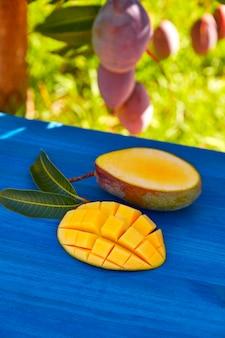 Mangobaum mit zubereiteter mangofrucht