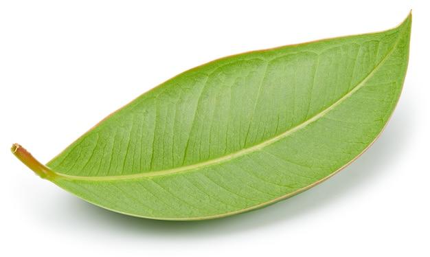 Mangoblätter lokalisiert auf weißem hintergrund. mango-beschneidungspfad. lebensmittelfotografie