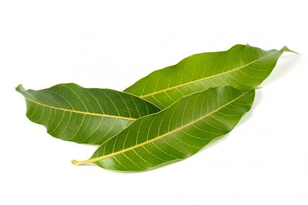 Mangogrün verlässt die natur auf weißem hintergrund
