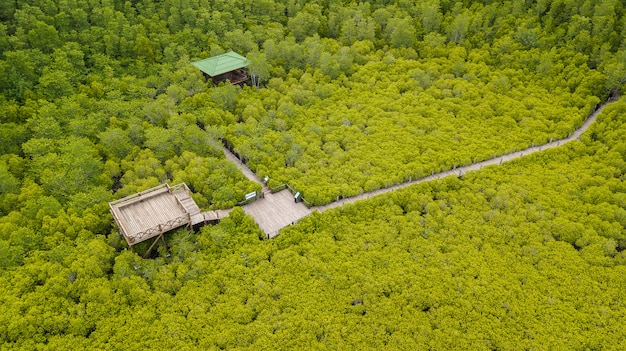Mangroven intung prong thong oder goldenes mangroven-feld bei mündung pra sae, rayong, thailand