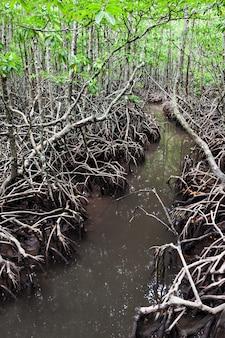 Mangroven wald