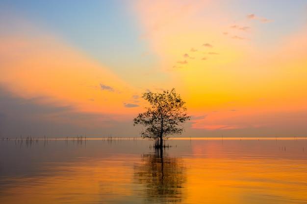 Mangrovenbäume im see mit buntem himmel auf sonnenaufgang an pakpra-dorf, phatthalung, thailand