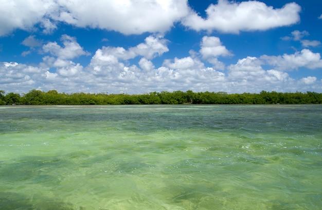 Mangrovenbäume in der karibik