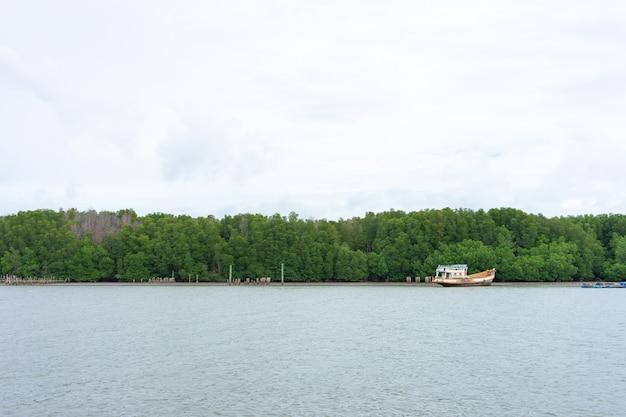 Mangrovenwald (ceriops decandra) auch bekannt als der goldene wiesenstift