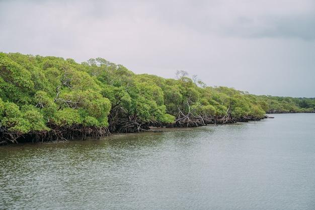 Mangrovenwald, grünes laub über der wasserlinie und wurzeln mit unterwasser-meereslebewesen, brasilianisches meer