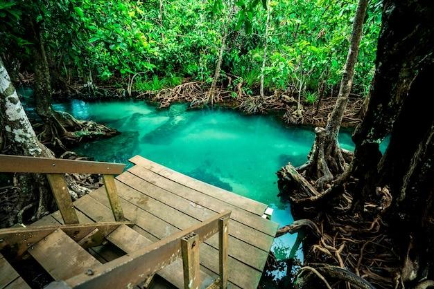 Mangrovenwald klares wasser, landschaftswald im nationalpark krabi, thailand.