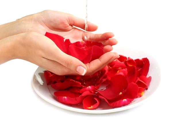 Maniküre - hände mit französischen nägeln, roten rosenblättern und wasser - schönheitssalon
