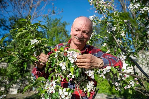 Mann, der blühende apfelbäume im obstgarten untersucht. gartenkonzept
