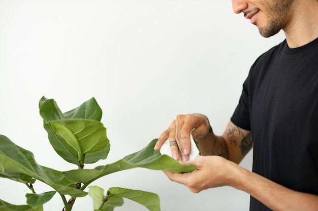 Mann, der das blatt der topfpflanze säubert