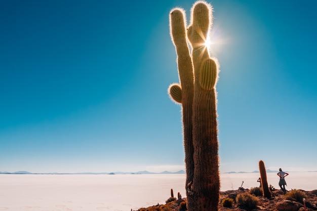 Mann, der das unendliche blau in salar de uyuni mit sonnenschein hinter großem kaktus betrachtet