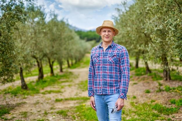 Mann, der ernte im olivenhain auf familienfarm am sonnigen tag sammelt.