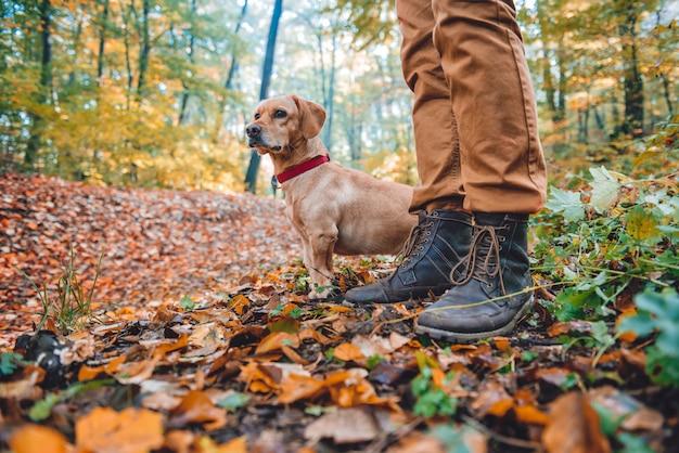 Mann, der im herbstwald mit hund wandert