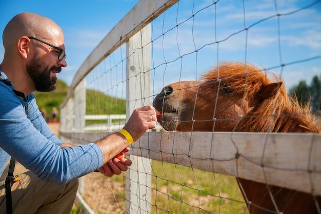 Mann, der junge schöne pony-karotte durch den zaun füttert