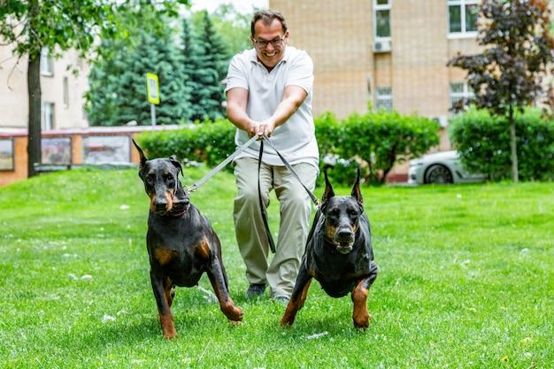 Mann, der spaß hat und mit seinen hunden im park spielt.