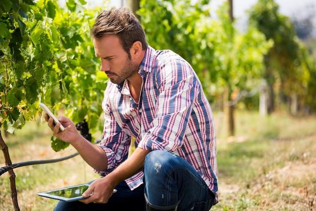 Mann, der telefon beim halten der tablette am weinberg verwendet