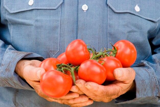 Mann, der tomaten, nahaufnahme hält