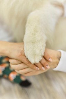 Mann, frau und hund nehmen sich gemeinsam die hände