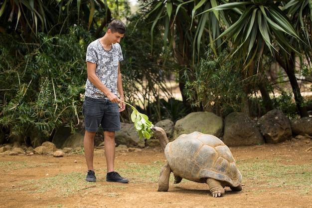 Mann füttert mit einem grünen zweig eine große alte aldabra-riesenschildkröte, aldabrachelys gigantea seychellenschildkröte und streichelt ihr eine rüstung.