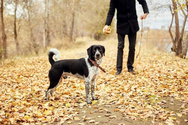 Mann geht in den fall mit hundespaniel-herbstpark