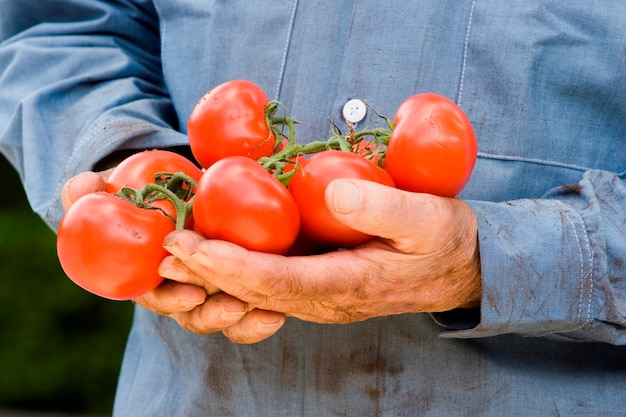 Mann hält tomaten