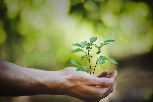 Mann hand pflanze