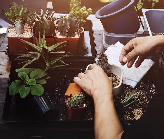 Mann houseplant auf dem tisch gartenarbeit