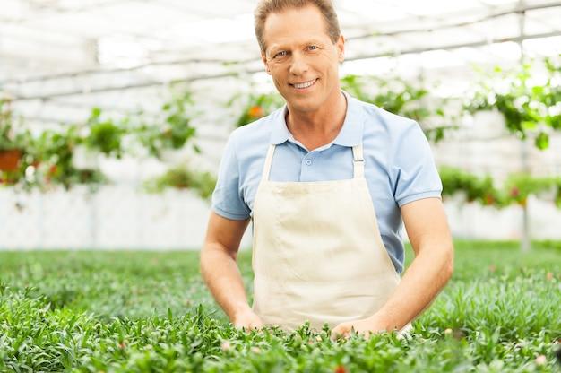 Mann im garten. schöner mann in schürze, der sich um pflanzen kümmert, während er im gewächshaus steht