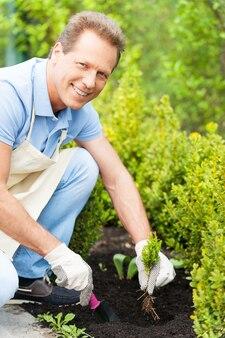Mann im garten. schöner reifer mann in schürze, der sich um pflanzen kümmert, während er im gewächshaus kniet