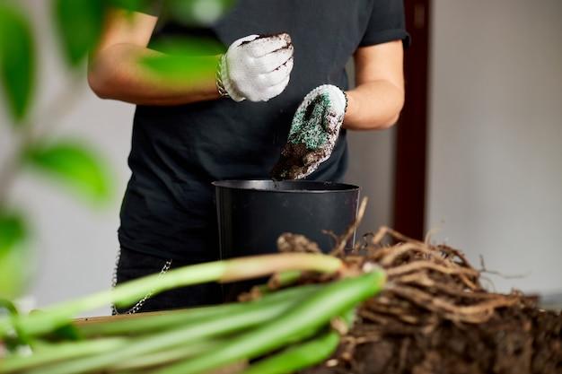 Mann legte erde in schwarzen topf auf holztisch, verpflanzte zimmerpflanzen, hobbys und freizeit, hausgarten.