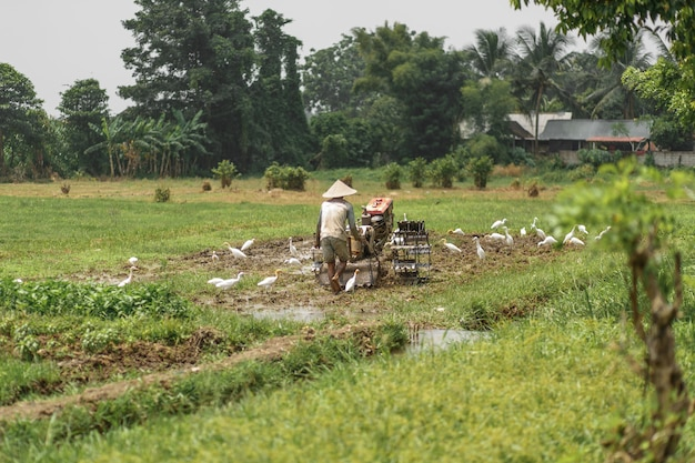 Mann pflügt das feld mit großem einem motorblock, bali indonesien