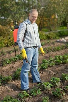 Mann spritzt erdbeerpflanze