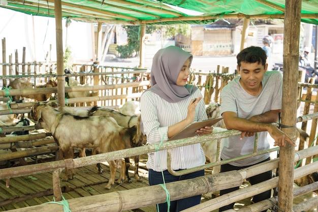 Mann und frau bauer auf ihrer farm, die die tiergesundheit zusammen überprüfen