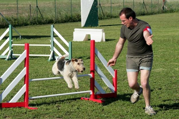 Mann und fuchs terrier in agilität