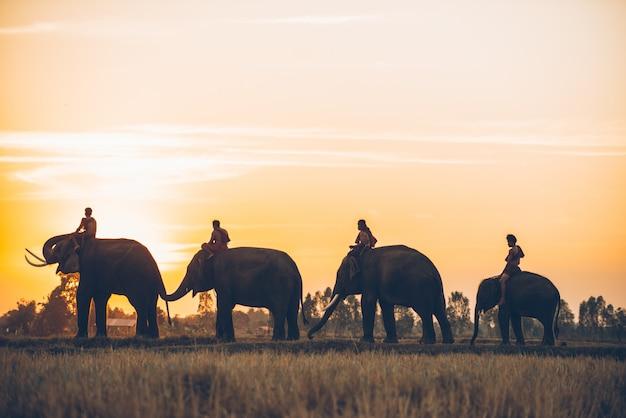Mann und sein elefant in nordthailand