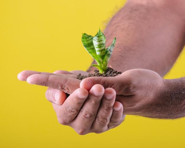 Mannhände, die kleine pflanze zeigen