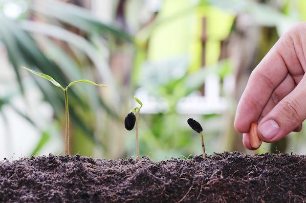 Mannhände, die samen in den boden pflanzen.