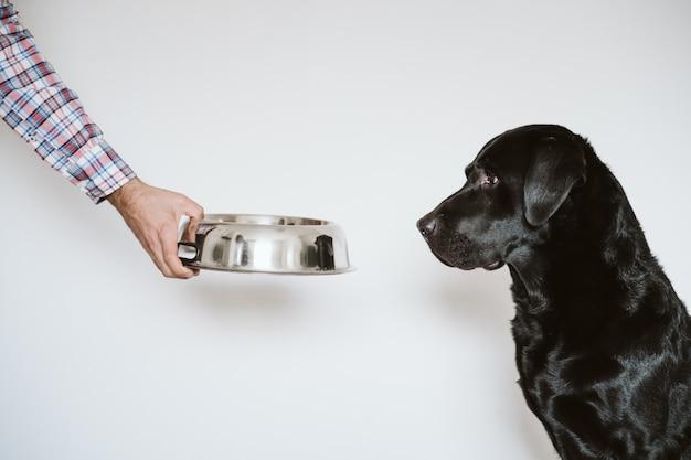Mannhand, die eine schüssel hundefutter hält. schöner schwarzer labrador, der darauf wartet, sein essen zu essen. zuhause, drinnen